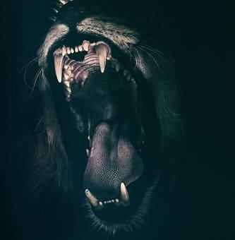 Sapience Coaching - Emotion Colère - Lion